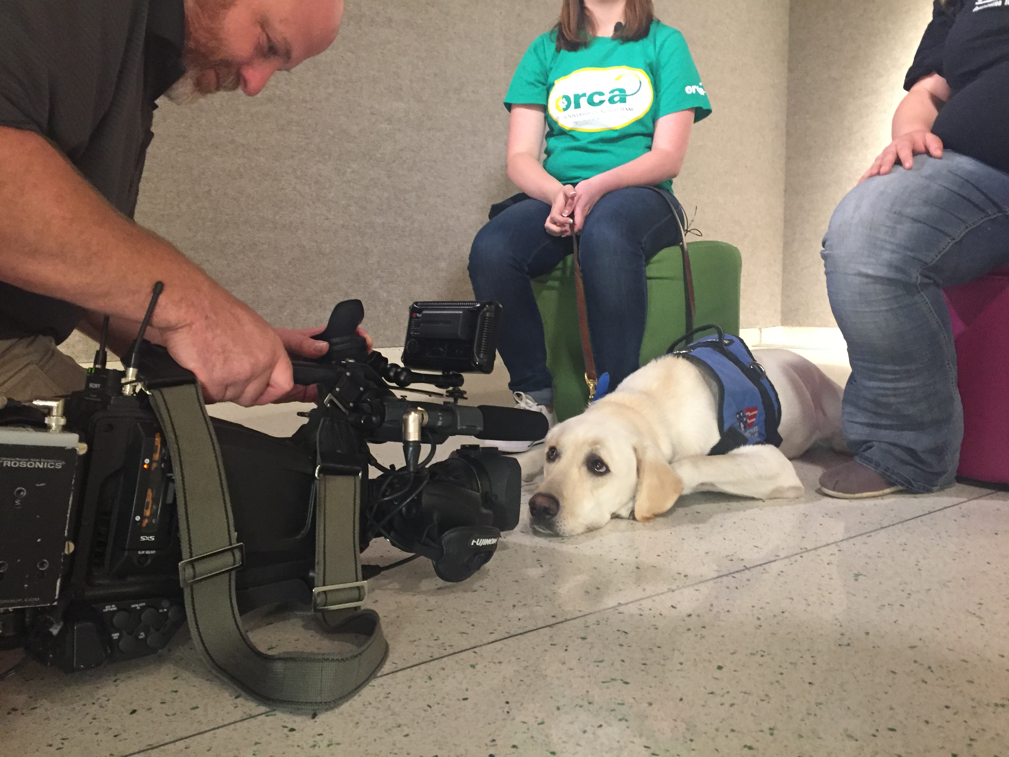 Drill Bit the Labrador retriever, during a TV interview