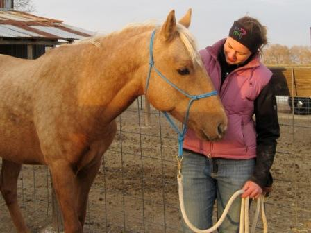 Connor, a good looking palomino gelding