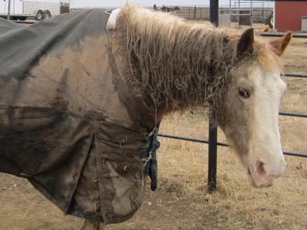 a VERY muddy horse!