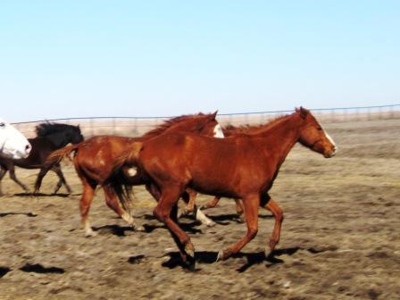 Daisy and Apollo go galloping past.