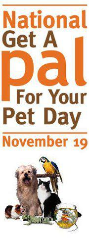 national get a pal for your pet day