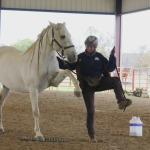 Horse clicker training - Garrow lifts his leg on cue